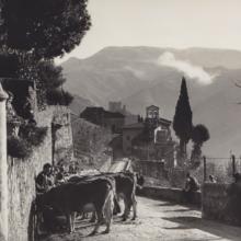 Benedizione del bestiame a Gricigliana, 1953